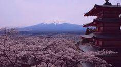 Image result for 雪と五重塔
