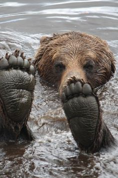 """bear feet.../ """"Alright who's blowing bubble's in my river ?"""""""