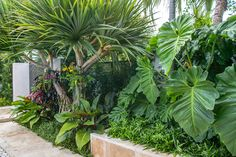 Landscape Architecture by Designer Craig Reynolds Small Tropical Gardens, Tropical Garden Design, Small Courtyard Gardens, Tropical Plants, Tropical Backyard Landscaping, Privacy Landscaping, Outdoor Landscaping, Backyard Plants, Potted Plants