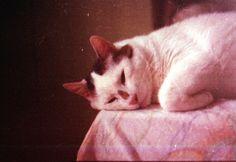 ~ Cats, Poster, Animals, Gatos, Animales, Animaux, Animais, Kitty, Cat