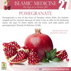 """Ibn Al-Qayyim said, """"Sweet pomegranate is good for the stomach and strengthens it, because it acts as a gentle astringent. It is beneficial for the throat, chest and lungs, and is good for coughs. Its juice acts as a laxative and offers slow nourishment to the body and stimulates sexual desire. It is not good for those who have fever."""
