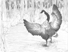The 2013 Florida Junior Duck Stamp of Thuy Tran, honorable mention in Group 4, grades 9-12. DDWS photo