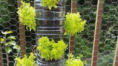 Want to start a garden but you don't have a yard? No worries, vertical gardening is the answer to your problem! Get your own vertical garden started with these easy tips. [Vertical Garden Wall Indoor, Home Garden Ideas, Gardening Ideas On A Budget] Jardin Vertical Diy, Vertical Garden Wall, Vertical Planter, Vertical Gardens, Small Vegetable Gardens, Small Space Gardening, Gardening For Beginners, Gardening Tips, Flower Gardening