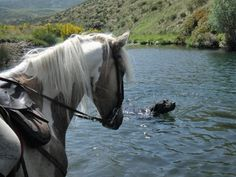 Summer in Gredos. Time to swimming!!    www.gredosacaballo.com