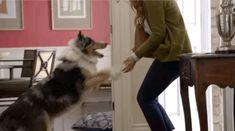 cachorro porta gif
