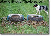 Pasture equipment basics, including DIY harrows/spreaders.