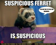 Too cute! The Suspicious Ferret ! Ferret Detective would be cute too!