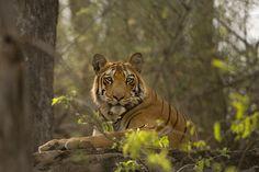 Photo 634 by Kalyan Varma