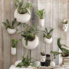 ceramic wall planters - shane powers