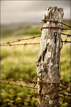 barbed wire  - interesting that man uses it  to organises farms/fields/countryside and nature in general