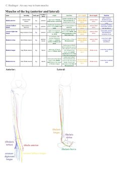 An easy way to learn lower limb muscles Exercise Physiology, Anatomy And Physiology, Lower Limb Muscles, Physical Therapy School, How To Massage Yourself, Medicine Notes, Cabinet Medical, Pta School, Muscular System