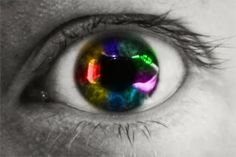 carlosenriquegascón: La evolución del ojo en la naturaleza y diez ejemplos de animales con una increíble visión