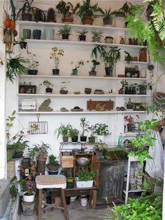 never enough plants!