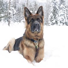 Winter Wonderland Featured Account @astro_gsd  #snow