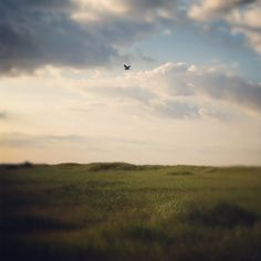 Chances are you'll see at least one graceful Blue Heron on your beach day. Blue Heron, Great Friends, Personal Photo, Nova Scotia, Staycation, Beach Day, Water Sports, Surfing, Beautiful Places