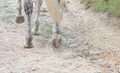 Barefootin' - Miranda Kavanagh's blog (UK)