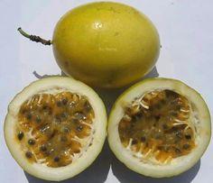 El fruto de la Pasiflora: Fruta de la pasión o maracuyá¡¡ me gusta mucho¡¡ es rica en vitamina C¡¡