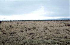 La Pampa argentina es una amplia extensión ocupada por diversos tipos de estepa que se van sucediendo desde las regiones tropicales situadas al Norte hasta ...