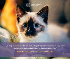 """""""Trebuie să recunoaştem că împărtăşim aceleaşi două dorinţe elementare: dorinţa de a gusta din fericire şi dorinţa de a evita suferinţa."""" Pisica lui Dalai Lama de David Michie Dalai Lama, Osho, Perth, Australia, Australia Beach"""