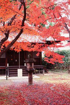 新長谷寺, via Flickr.