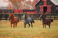 Colorful horse trio by a barn