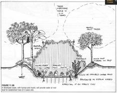 Permaculture Designs A developed swale with humus and mulch will provide water at root level for established trees years).A developed swale with humus and mulch will provide water at root level for established trees years). Permaculture Design, Organic Farming, Organic Gardening, Vegetable Gardening, Veggie Gardens, Square Foot Gardening, Annual Plants, Hobby Farms, Garden Gifts