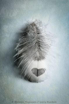 Feather with heart shape Heart In Nature, Heart Art, I Love Heart, Bird Feathers, Black Feathers, Belle Photo, Heart Shapes, Wings, Inspiration