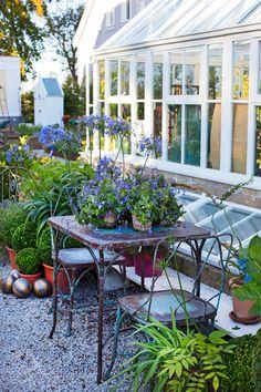 Blå blommor, som agapantus, passar fint till grusgångarna och trädgårdsmöblemanget av järntråd från ett litet företag i Osby.