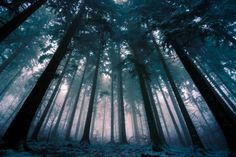 magic-spelldust:   Thats the forest I love by   Jürgen...