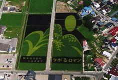 Community Post: 24 Unbelievable Photos Of Japanese Rice Field Art