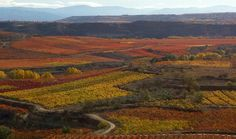 Spanish Wine Exclusives   Spanish Wine Exclusives Website