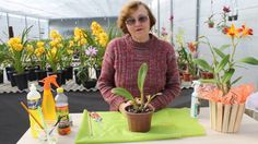 Orchids, Vegetables, Videos, Orchid Seeds, How To Replant Orchids, House Plants, All About Plants, Succulents, Agriculture