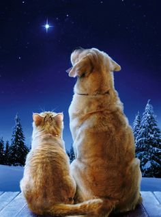 Ginger lab and kitty Christmas card • design / photo: Avanti on Amazon