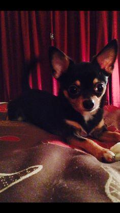 cute dog yeah he's not my dog btw