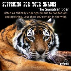 Palm oil is in processed foods, snacks, fast food, shampoos and body care products. Make your own, avoid palm oil and save lives.