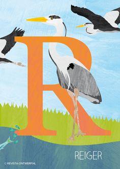 De R is van reiger. Langs de waterkant staat hij geduldig te wachten tot er een visje voorbijkomt en hij kan toehappen… www.revista-ontwerp.nl
