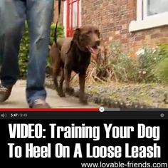 VIDEO: Training Your Dog To Walk To Heel