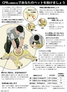 Twitter / nankyokuguma: 犬猫の、非常時の心肺蘇生方法。フェイスブックのDogLove ...