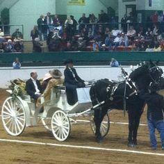 White carriage drawn by black Percheron horses...love it!