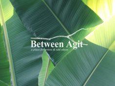 앞으로 선보일 비트윈아지트의 새로운 오브제들과 연관이 있는 사진이랍니다. 초록식물, plants, tropical plant, green