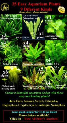 $26!! <3 = liveplants1436938318 - 35 Live Aquarium Plants 9 Kinds - FREE SHIPPING!