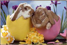 Obrazki gifowe: Wielkanoc