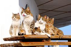 http://www.catster.com/lifestyle/cat-care-streamline-life-multiple-cats