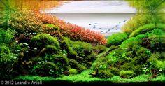 Belíssimo aquário plantado! #aquapaisagismo
