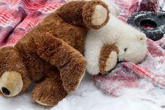 Kali at the Alaska Zoo goes paw to paw with teddy bear! Photos courtesy of Alaska Zoo / John Gomes