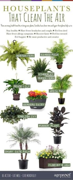 10 Best Houseplants That Clean The Air We all know that fresh air is vital for our good health but what if youre stuck indoors most of the time? Heather McNicol from interior landscaper Urban Planters shows how just one or two air-purifying plants Air Plants, Garden Plants, Air Purify Plants, House Plants Air Purifying, Indoor Plants Clean Air, Plants That Clean Air, Good Indoor Plants, Conservatory Plants, Indoor Bamboo