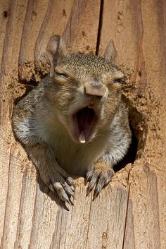 Just singing his praises to the Lord with gusto!!!!! At least his heart is in it.....// grey squirrel by chaines9~~