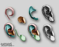 Anatomy 4 Sculptors by Anatomy 4 Sculptors, via Flickr