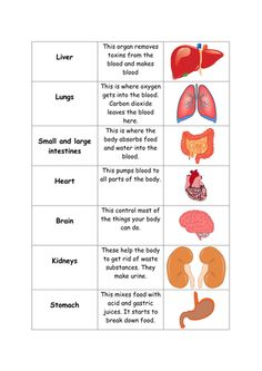 Matching activity for names, functions and diagrams of human organs. Human Body Lesson, Human Body Science, Human Body Activities, Human Body Unit, Human Resources, Teaching Resources, Body Organs Diagram, Human Body Diagram, Human Body Anatomy