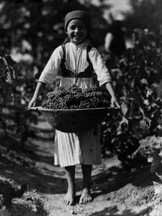 Grape Harvest Photographic Print at Art.com